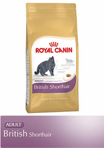 royal canin british shorthair adult trockenfutter. Black Bedroom Furniture Sets. Home Design Ideas