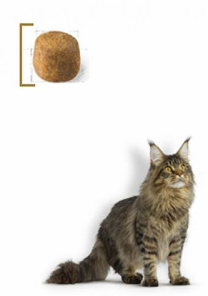 royal canin maine coon adult trockenfutter